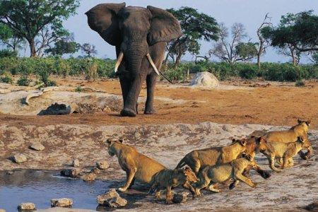 الحديقة الوطنية في غامبيا