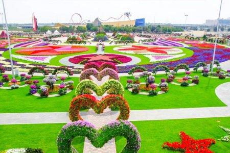 حديقة الزهور - ميراكل جاردن