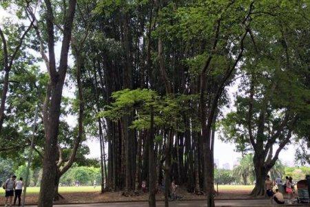 متنزه باركي دو إبيرابويرا في مدينة ساوباولو