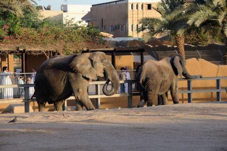 حديقة الحيوان في الرياض
