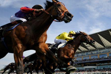 سباق الخيول في الرياض