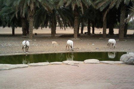 مركز حيوانات شبه الجزيرة العربية في الشارقة - الإمارات