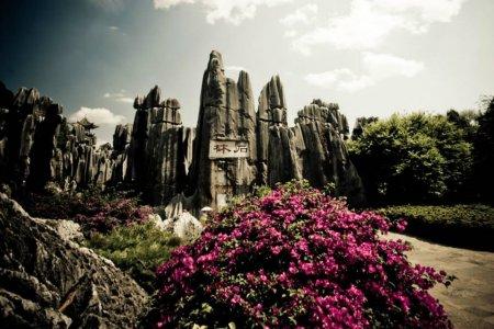 غابة الاحجار في الصين