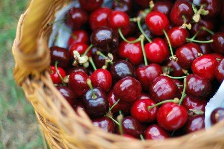 فاكهة الكرز