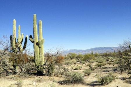 صحراء توسان في ولاية أريزونا