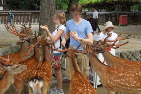 السياح يطعمون الغزلان بمدينة نارا