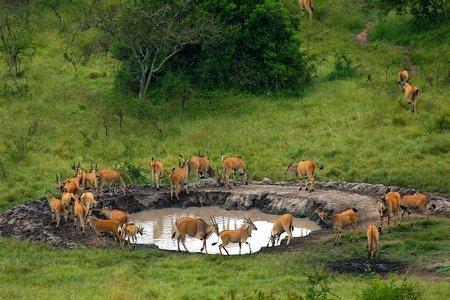 السياحة في دولة اوغندا