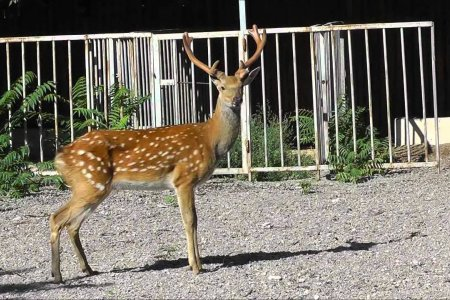 حديقة حيوانات أوديسا في أوكرانيا