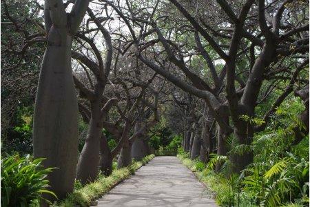 حديقة باليرمو النباتية في مدينة باليرمو