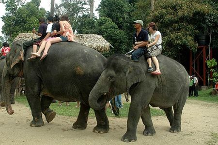حديقة الفيلة في باهانج - ماليزيا