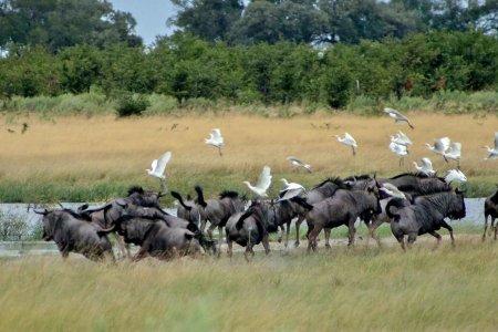 الحياة البرية في دلتا أوكافانغو