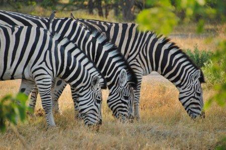 محمية موريمي في بوتسوانا