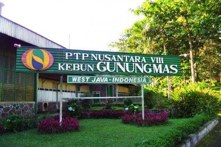 مزارع جونونج ماس في بونشاك - إندونيسيا