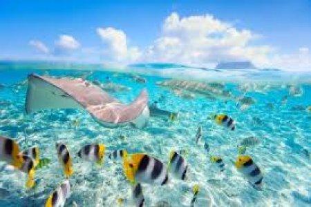 الاسماك في جزر بولينزيا