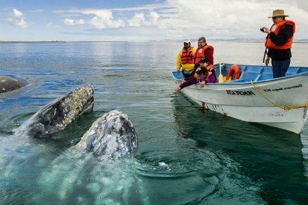 الحيتان في سامانا