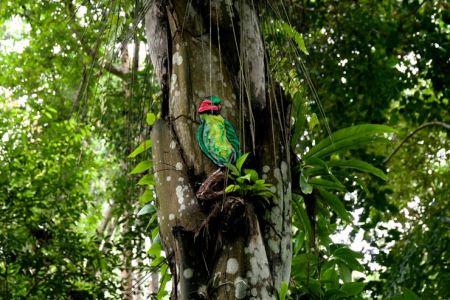 حديقة انداو رومبين جوهور بارو - ماليزيا