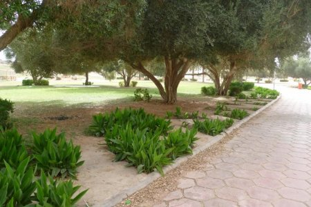 حديقة الزيتون في حائل
