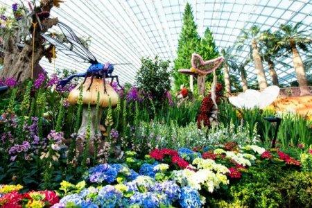نباتات حدائق الخليج الرائعة