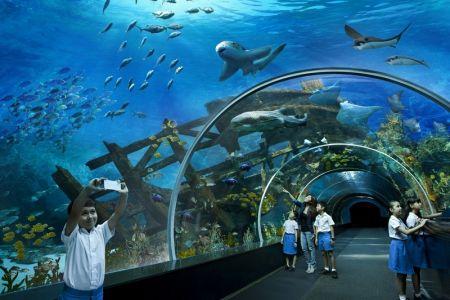 حديقة المحيطات في شنغهاي - الصين
