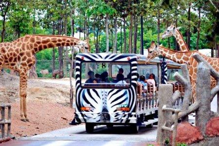السياح يستمتعون في حديقة حيوانات شنغماي