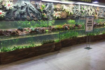 حوض شيد المائي في شيكاغو