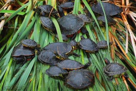 محمية السلاحف في سلطنة عمان