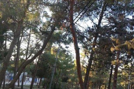 منتزه عمان القومي