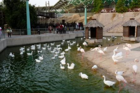 حديقة الحيوانات في الدوحة - قطر
