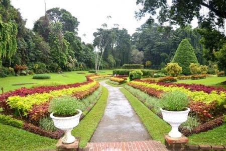 الحدائق الطبيعية الملكية في كاندي - سريلانكا