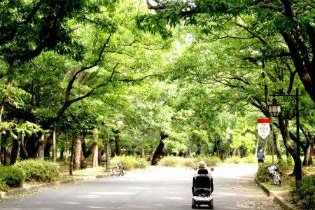 حديقة هوانغ سيونغ في مدينة جيونجو