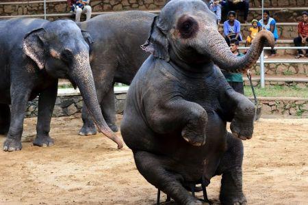 حديقة كولومبو للحيوانات
