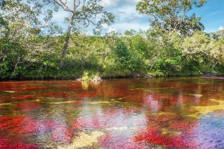 نهر الكريستال كولومبيا