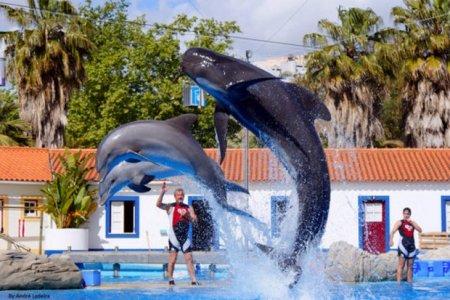 عرض الدولفين في حديقة حيوانات لشبونة