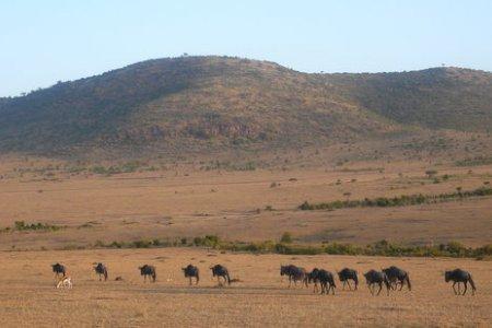 حيوانات محمية ماساي مارا