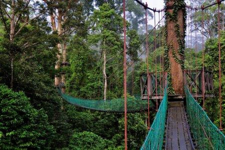 محمية وادي دانوم في ولاية صياح الماليزية