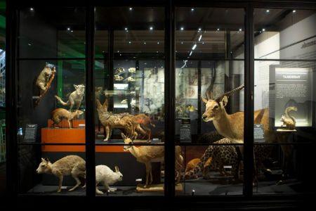 متحف مانشستر