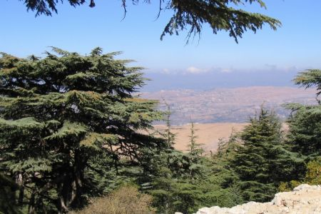 بلدية الباروك في محافظة جبل لبنان
