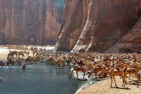محمية وادي الجمال في مصر