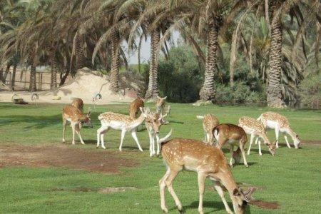 أفريكا سفاري بارك في الإسكندرية مصر