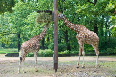 حديقة حيوانات برلين