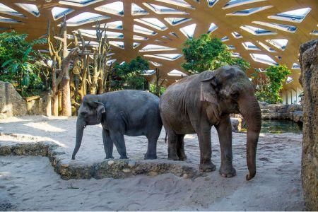 حديقة حيوانات زيورخ في سويسرا
