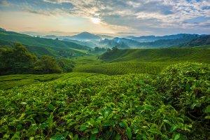 السياحة في باهانج - ماليزيا