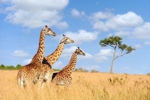 دليل السياحة في تنزانيا