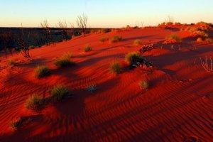 صحراء جيبسون أستراليا