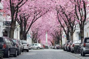 جمال الأشجار والشوارع في مدينة بون