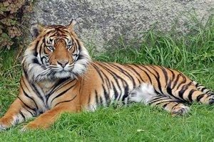 حديقة حيوان أوكلاند