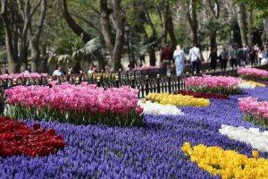 مهرجان أزهار التوليب