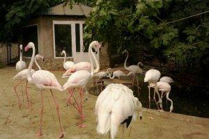 حديقة حيوانات باكو في أذربيجان