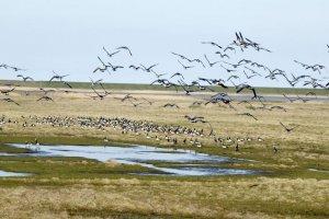 الطيور في حديقة بحر وادن الوطنية في ايسبيرغ