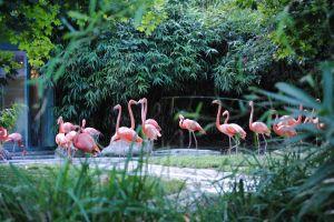 حديقة حيوانات الشونبرون في فيينا